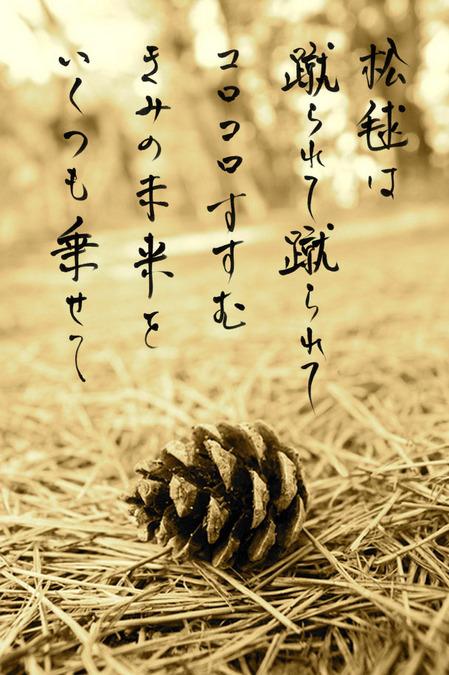 まつぼっくり_5002112.jpg