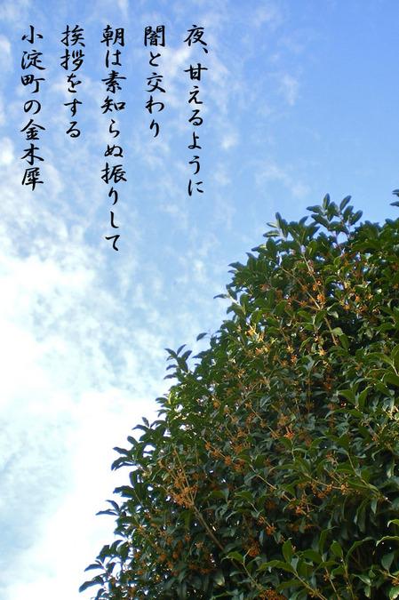 金木犀_IMGP7039.jpg