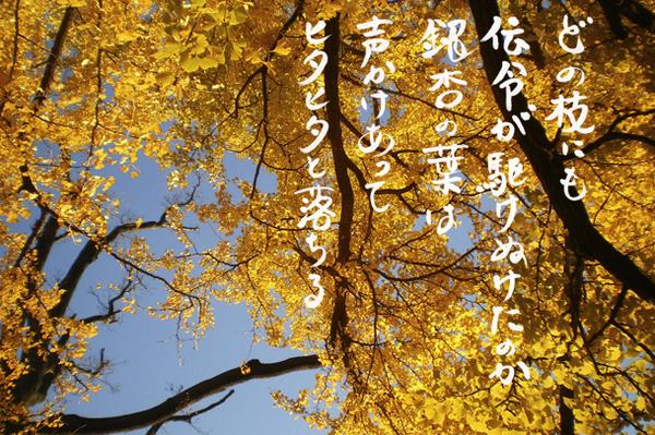 銀杏_IMGP3236.jpg