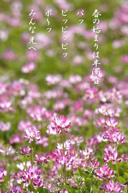 春の始まり_228921.jpg