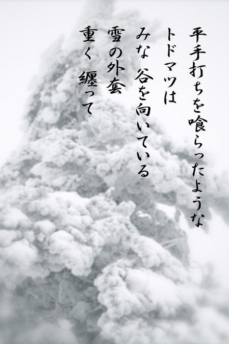 トドマツ_0726.jpg
