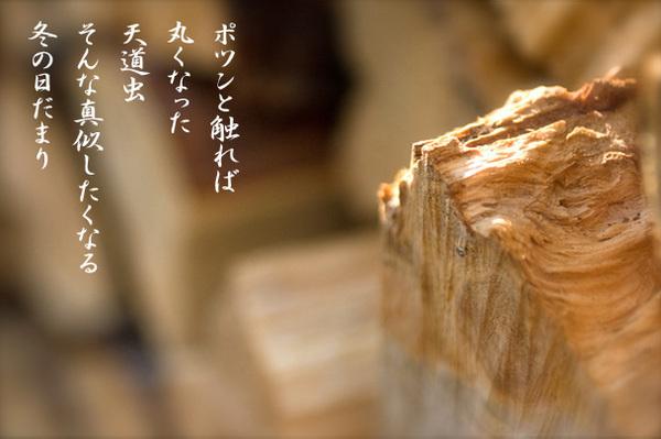 天道虫_5714352.jpg