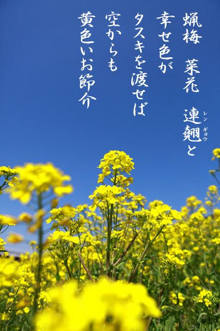 黄色いお節介_8709755.jpg