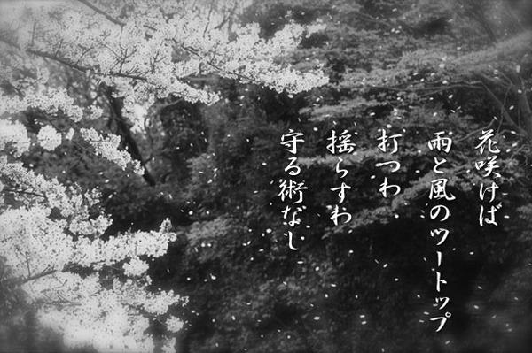 花咲けば_832042.jpg