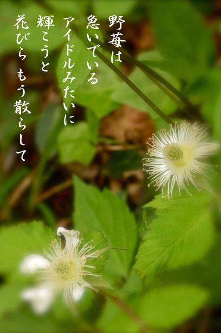 2014_05_野苺.jpg