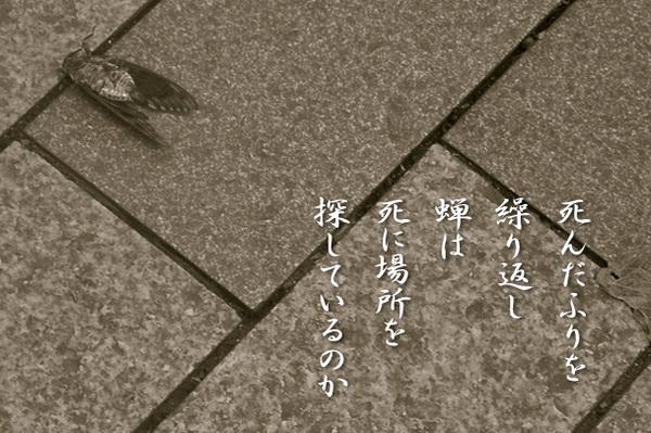 2014_09_蝉.jpg