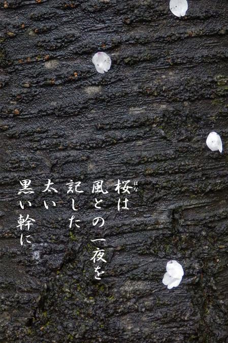 2015_04_桜.jpg