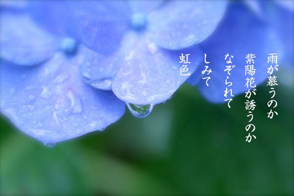 2015_06_紫陽花2.jpg