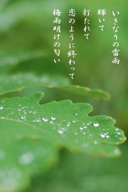 2015_08_いきなりの雷雨.jpg