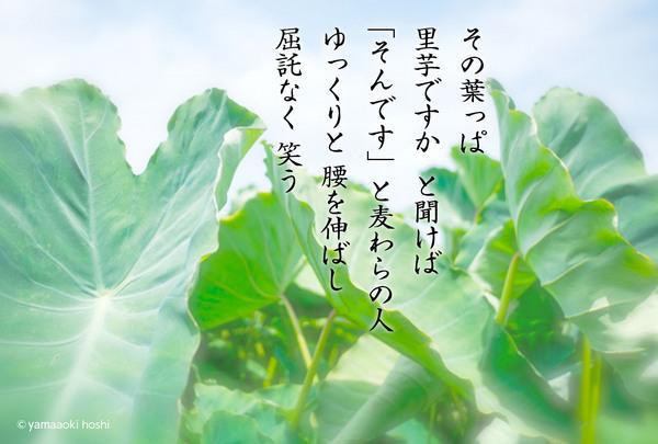 2016_11_その葉っぱ.jpg