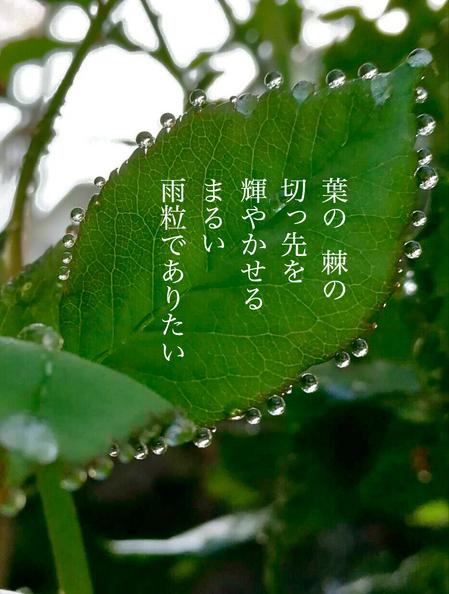 雨粒.jpeg