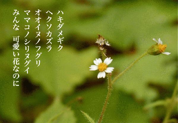 可哀想な花.jpg