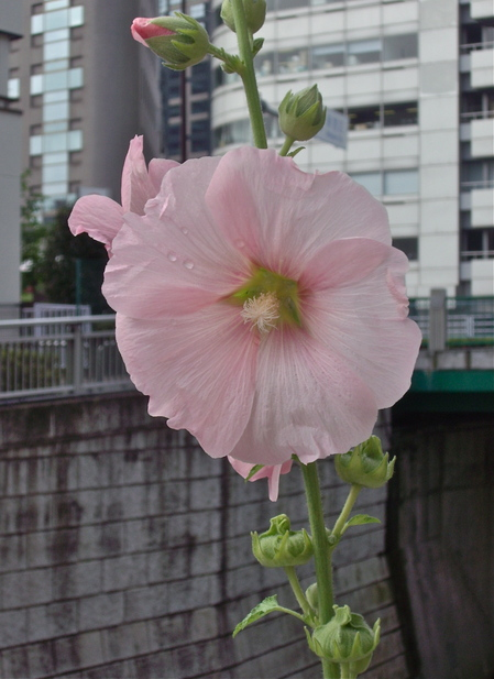 IMGP3625.JPGのサムネール画像