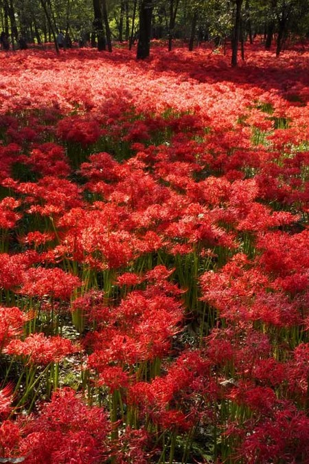 真っ赤な絨毯(BB.jpg