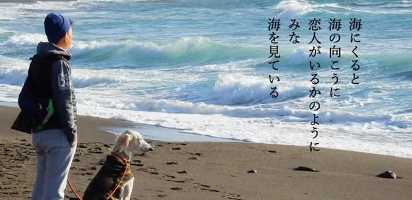 海を見ている.jpg